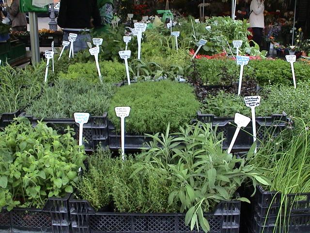 horta jardim associados : horta jardim associados:Sindicato Rural de Maringá – Plantas Medicinais, Aromáticas e